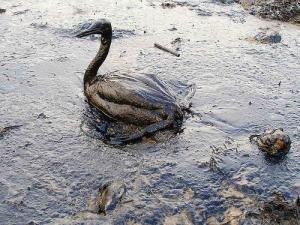 14720_oil-spill