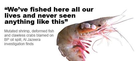 mutated shrimp