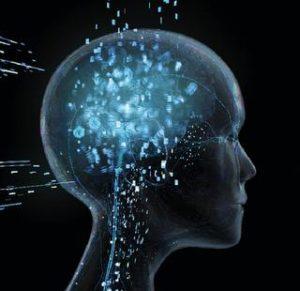 cerebro neocortex